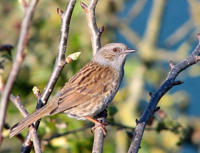 Quiz: can you identify more birds? | Feathered fun | Manaaki Whenua