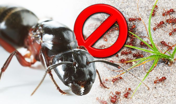 How to get rid of ants: Top tips to kill annoying insects