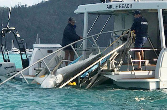 Shark attack, Cid Harbour Whitsundays: Man dies after 'worst