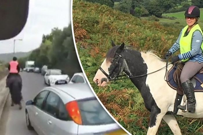 Countryfile viewers brand drivers a******s as horse KILLED