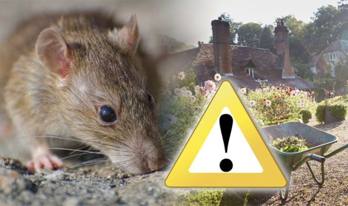 How To Get Rid Of Rats In The Garden For Good And Why You